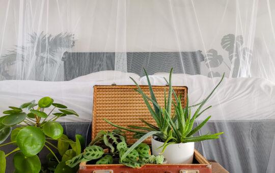 moskitonetz doppelbett